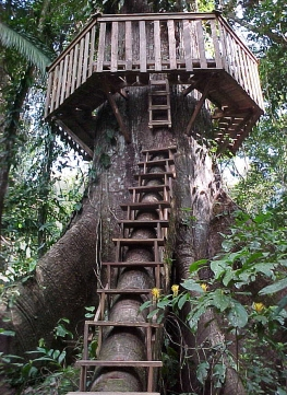 Treehouse_access_and_roundwalk